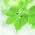 Bright Green Leaves Poster by imagewerks