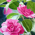 Bright Rose-Colored Camellias Print by Sharon Freeman