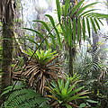 Bromeliads And Tree Ferns  Poster by Cyril Ruoso
