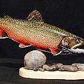 Brook Trout 14 inch Poster by Eric Knowlton