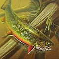 Brook Trout Cover Print by JQ Licensing