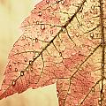 Brown Autumn Poster by Carol Leigh