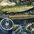 brown trout rush creek Poster by Mark Jennings