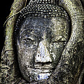 Buddha Head in Banyan Tree Poster by Adrian Evans