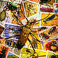 Bugs on postage stamps Poster by Garry Gay