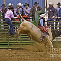 Bull Rider 2 Print by Sean Griffin