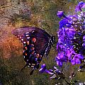 Busy Spicebush Butterfly Print by J Larry Walker