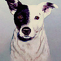 Butch the Smooth Fox Terrier Print by  Bob and Nadine Johnston