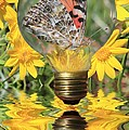 Butterfly In A Bulb II by Shane Bechler