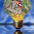 Butterfly In Lightbulb Poster by Shane Bechler