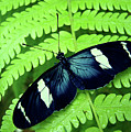 Butterfly On Leaf. Poster by Kryssia Campos