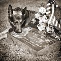 Buy a print. Show your support for Reading K9 Police.  Willow Street Pictures.  Print by Darren Modricker