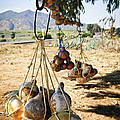 Calabash gourd bottles in Mexico Poster by Elena Elisseeva