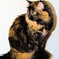 Calico Cats Poster by Cheryl Poland