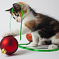 Calico kitten and Christmas ornaments Poster by Garry Gay