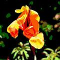 Canna in Summer Poster by Dorrie Pelzer