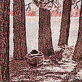 Canoe in the Woods Poster by Cheryl Young