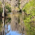 Canoeing on the Hillsborough River Poster by Carol Groenen