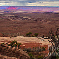 Canyonland Overlook Poster by Robert Bales