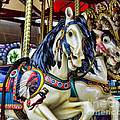 Carousel Horse 2 Poster by Paul Ward
