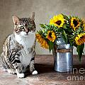 Cat and Sunflowers Poster by Nailia Schwarz