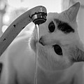 Cat Drinking Water From Faucet Poster by A*K