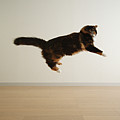 Cat Jumping In Air Poster by junku