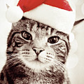 Cat Wearing Christmas Hat Poster by Michelle McMahon