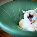 Cat Yawning In A Vintage Blue Green Chair Poster by Carrie Anne Castillo