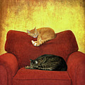 Cats Sleeping On Sofa Print by Nancy J. Koch, Pittsburgh, PA