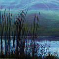 Cattails in Mist Print by Judi Bagwell