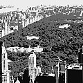 Central Park BW3 Poster by Scott Kelley