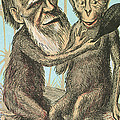Charles Darwin Caricature, 1874 Poster by Science Source