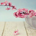 Cherry Blossoms In Bowl Print by Hayley Johnson Photography
