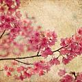 Cherry Blossoms Print by Rich Leighton