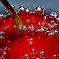 Cherry Bubbles Under Water Poster by Tracie Kaska