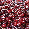 Cherry Print by Francois Cartier
