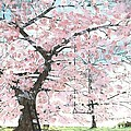 CHERRY TREES Print by Patrick Grills