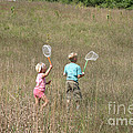 Children Collecting Insects Poster by Ted Kinsman