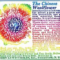 Chinese Woolflower Print by Eric Edelman