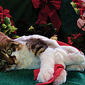 Christmas Joy w Kitty Cat - Kitten w Large Eyes Daydreaming about Xmas Gifts - Framed w Poinsettias Poster by Chantal PhotoPix