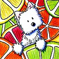 Citrus Westie Poster by Kim Niles