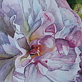 Close Focus Peony Print by Patsy Sharpe