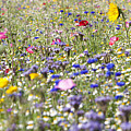 Close Up Of Vibrant Wildflowers In Sunny Field Poster by Echo
