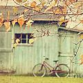 Closeup of leaves with old barn in background Poster by Sandra Cunningham