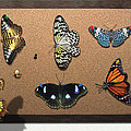 Collector - Lepidopterist - My Butterfly Collection Poster by Mike Savad