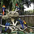 Colorful birds on a branch inside the Jurong Bird Park in Singap Poster by Ashish Agarwal