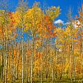 Colorful Colorado Autumn Landscape Poster by James Bo Insogna