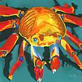 Colorful Crab II Print by Stephen Anderson