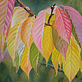 Colorful Fall Leaves Print by Sharon Freeman